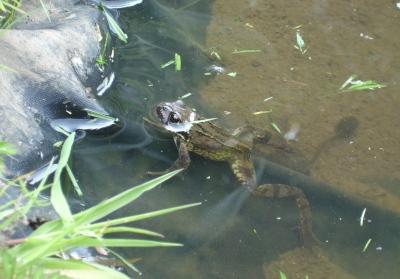 pond life May 2014
